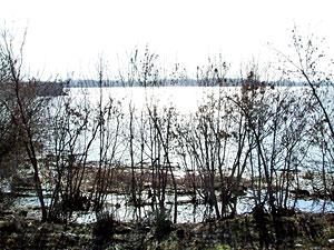 dunav-zimi