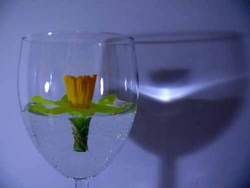 cvet-u-casi-umetnicka-fotografija